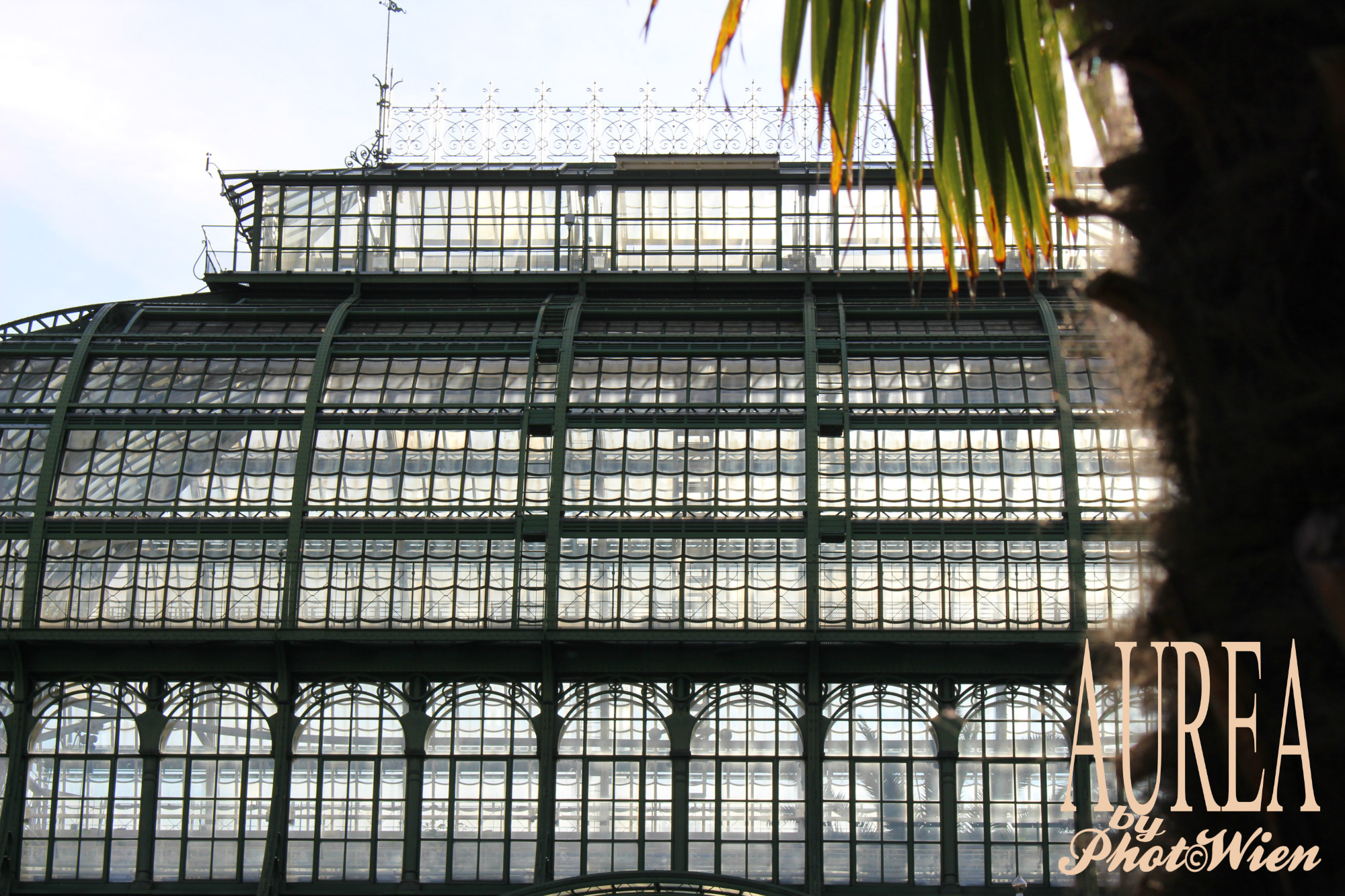 schonbrunn_palmenhaus-with-palm-tree_aurea